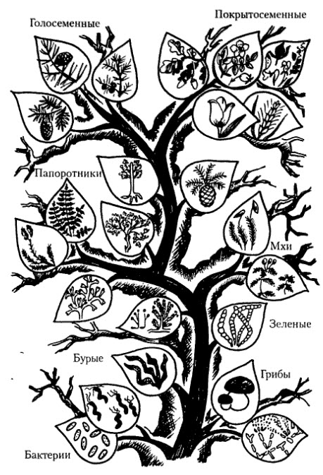 дерево развития растительного мира